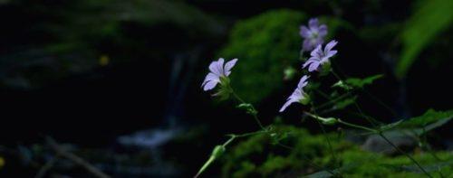Rimaniamo in tema fiori: il mio poker di fiori in Piemontese!
