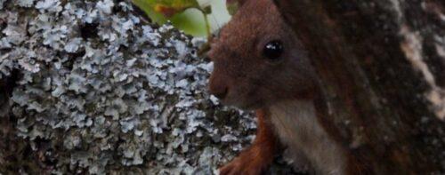 Scoiattoli: i piccoli abitanti del bosco visti da vicino!