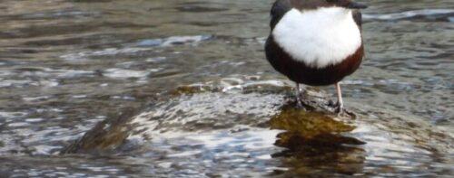 Birdwatching in Val Chisone… sotto zero!